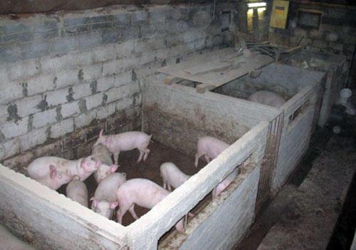 Свинарник на 4 головы своими руками 27