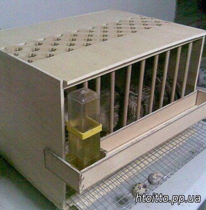 Клетка для перепела разведение в домашних условиях